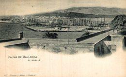 PALMA DE MALLORCA EL MUELLE HAUSER Y MENET - Árboles