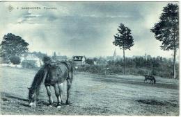 Ganshoren. Panorama Avec Cheval. - Ganshoren