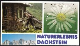 Austria Dachtein / Tourism, Hollidays / Prospect - Reclame