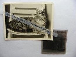 Chat Cat Sur Une Chaise Avec Couronne Galette Des Rois PHOTO Originale Real Photo + NEGATIF 6x6 Cliché Amateur - Personnes Anonymes