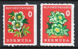 Bermuda  Christmas Charity Label Undated And Inscribed Help Chest Patients In Mounted Mint Condition. - Cinderellas