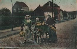 Belgique Laitieres Route Pour La Ville - Attelages