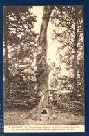 Malmédy. Chêne Séculaire Historique Qui Servait à Pendre Les Criminels. 1924 - Malmedy