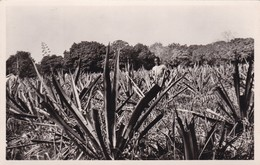 DAHOMEY / SAVE / PLANTATION DE SISAL / FONTANON 3 / RARE - Dahomey