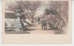 A724 /  JAPON    / PLUM  TREES  AND  POND - NAGAOKA   /  Circa 1900 :   ( Recto - Verso ) - Japon