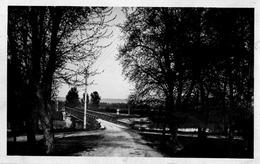 Jonage ; Sous Bois A L'entrée Du Pont - France