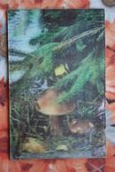 MUSHROOM  - OLD  USSR Postcard 3D Stereo PC 1982 - VERY RARE! - Champignons