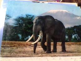 ELEPHANT AFRICA  ALEFANTE E KILIMANJARO  V1975 GU2890 - Elephants