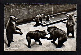 Suisse / Zoo,Animal / Berne / La Fosse Aux Ours - BE Berne