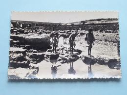 KASBAH-TADLA Scène Sur Les Rives De L'Oum Er Rebia (La Cigogne) Anno 1948 ( Voir Photo Pour Détail Svp ) ! - Maroc