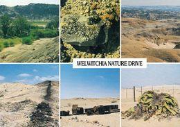1 AK Namibia * Landschaften In Namibia - U.a. Der Swakop River Canyon Und Eine 1500 Jahr Alte Welwitschie Pflanze - Namibie