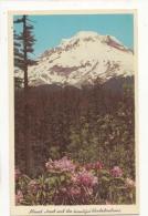 Etats Unis -OR - Mount Hood, And Beautiful Rhododendron -   Achat Immédiate - Non Classés