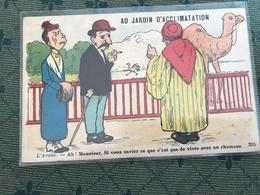 Humour Chameau 1926 - Humour