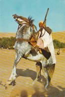 Algeria The Fascinating South A Cavalier - Algeria