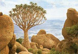 South West Africa (Namibia) - Damaraland - Quiver Tree On Brandberg - Namibie