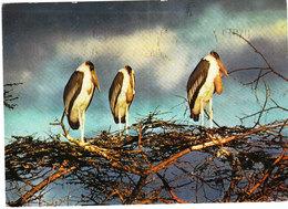 SWAZILAND POSTCARDS 1965 - Swaziland (1968-...)