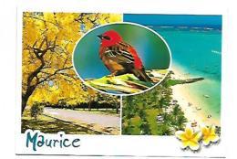 ILE MAURICE COULEURS LOCALES  CARTE MULTIVUES - Mauritius