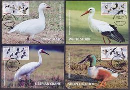 MAXIMUM CARD - MIGRATORY BIRDS IN PAKISTAN 2012 - Set Of 4 Post Cards - Oiseaux
