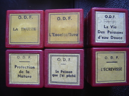 Lot FILM FIXE 35mm POISSON PECHE Truite Ecrevisse Esociculture - 35mm -16mm - 9,5+8+S8mm Film Rolls