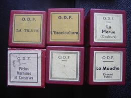 Lot FILM FIXE 35mm POISSON PECHE Maritime Morue Esociculture - Bobines De Films: 35mm - 16mm - 9,5+8+S8mm