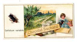 Chromo Suchard, Serie 63, Insects, Coleoptère, Insekten, Käfer - Suchard