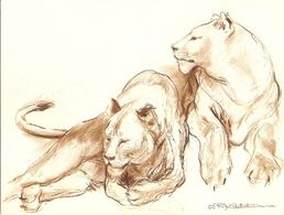 CP Lion - 2 Lionnes - Dessin De Riky Schellart - Lions