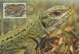 D34662 CARTE MAXIMUM CARD 1989 JERSEY - GREEN LIZARD LACERTA CP ORIGINAL - Reptielen & Amfibieën