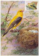 D34666 CARTE MAXIMUM CARD 1962 HUNGARY - GOLDEN ORIOLE CP ORIGINAL - Songbirds & Tree Dwellers