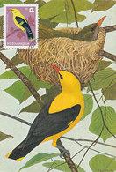 D34667 CARTE MAXIMUM CARD 1965 BULGARIA - GOLDEN ORIOLE CP ORIGINAL - Songbirds & Tree Dwellers