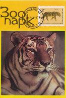 D34671 CARTE MAXIMUM CARD 1974 BULGARIA - TIGER CP ORIGINAL - Big Cats (cats Of Prey)