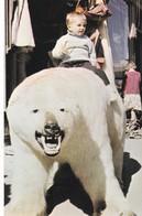 Postcard Norway Norge Tromso Main Street Polar Bear And Pipe Smoking Hunter My Ref  B12342 - Norvège