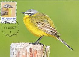 D34714 CARTE MAXIMUM CARD RR 2017 NETHERLANDS - YELLOW WAGTAIL - PLEASE READ!! CP ORIGINAL - Songbirds & Tree Dwellers