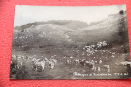 Montagna Di Frosolone Campobasso Scene Agreste 1963 - Unclassified