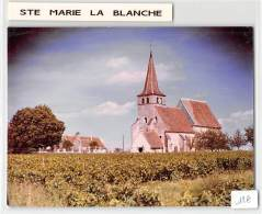 21 - COTE D 'OR / Cliché Unique Epreuve COMBIER - Format 17 X 11,5 Cm - Sainte Marie La Blanche - Autres Communes