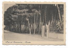 LIDO DI CAMAIORE - PINETA - NV FG - Lucca