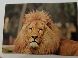 CPA 2 CARTES LION - Lions