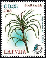 Latvia Lettland Lettonie 2018 (11) Aquatic Plant - Najas Tenuissima - Bird - Kingfisher - Lettonia