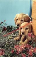 Chien - Dog - Hond - Chiens