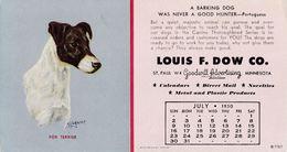 Fox Terrier - Dog - Chien - Cane - Hund - Hond - Perro - Chiens