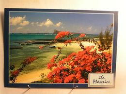Ile Maurice - Bain Boeuf - Mauritius