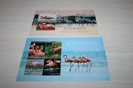 Birds Flamingo 2017 St. Vincent - Flamingo