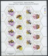 Ireland 2018 Fauna, Insects, Native Irish Bees, Honeybees - Abeilles