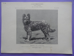 Chien - MOUJIK II Berger De Brie à M. Chappellu De Nancy Planche Du Journal Des éleveurs L'Acclimatation 1906 Concours - Tiere