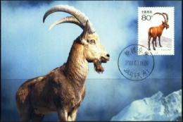 WILD LIFE-MOUNTAIN GOATS-CAPRA IBEX-MAXIMUM CARD-CHINA-2001-SCARCE-MC-45 - Timbres