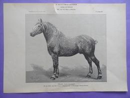 Cheval - UHLAN - étalon Boulonnais à Eterpigny (Pas-de-Calais) Planche Du Journal Des éleveurs L'Acclimatation 1906 - Animaux