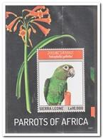 Sierra Leone 2013, Postfris MNH, Birds, Parrots - Sierra Leone (1961-...)