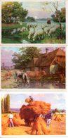 Lot De 3 Buvards Avec Motifs Des Illustrations Des Buvards Crocala (pas D'inscription Publicitaire) - Chocolat