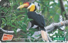Thailand Phonecard Thaicard CAT Kat. 4832  Wrinkled Hornbill - Thaïland