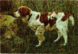 CPM English Setter CHIEN (717200) - Honden
