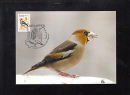 BELARUS, CARTE MAXIMUM - BIRDS COCCOTHRAUSTES COCCOTHRAUSTES ** - Sparrows